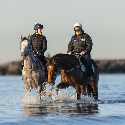 TheAutumnSun-D'argento-10142018-7376 - THE AUTUMN SUN (Redoute's Choice - Azmiyna) at Altona Beach, ridden by Johanne Taylor.  His companion is D'ARGENTO....
