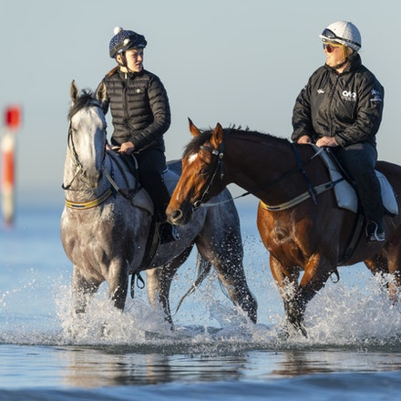 TheAutumnSun-D'argento-10142018-7496 - THE AUTUMN SUN (Redoute's Choice - Azmiyna) at Altona Beach, ridden by Johanne Taylor.  His companion is D'ARGENTO....