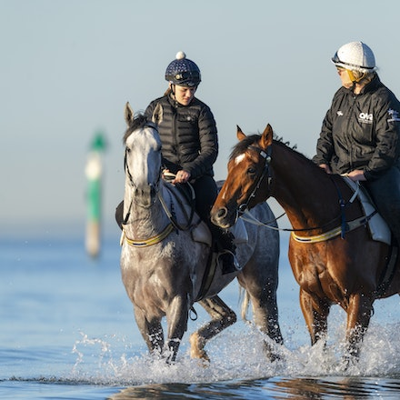 TheAutumnSun-D'argento-10142018-7502 - THE AUTUMN SUN (Redoute's Choice - Azmiyna) at Altona Beach, ridden by Johanne Taylor.  His companion is D'ARGENTO....