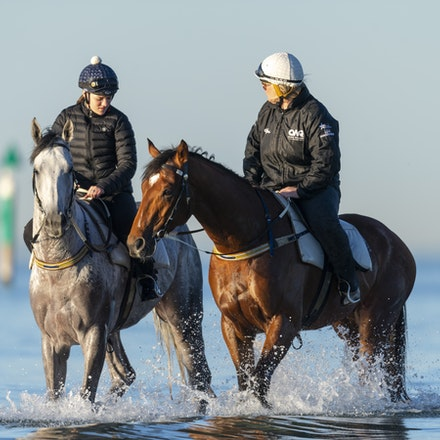 TheAutumnSun-D'argento-10142018-7503 - THE AUTUMN SUN (Redoute's Choice - Azmiyna) at Altona Beach, ridden by Johanne Taylor.  His companion is D'ARGENTO....