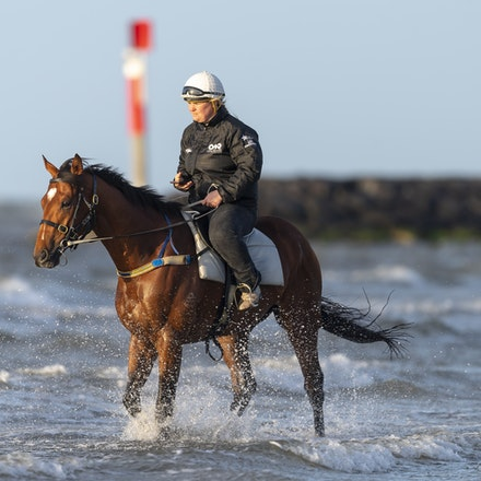 TheAutumnSun-10102018-0342 - Caulfield Guineas favourite THE AUTUMN SUN (Redoute's Choice - Azmiyna) at Altona Beach.    Ridden by Johanne Taylor.  Photo...