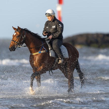 TheAutumnSun-10102018-0355 - Caulfield Guineas favourite THE AUTUMN SUN (Redoute's Choice - Azmiyna) at Altona Beach.    Ridden by Johanne Taylor.  Photo...