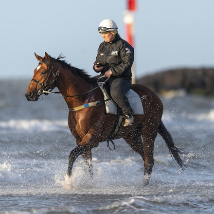 TheAutumnSun-10102018-0356 - Caulfield Guineas favourite THE AUTUMN SUN (Redoute's Choice - Azmiyna) at Altona Beach.    Ridden by Johanne Taylor.  Photo...