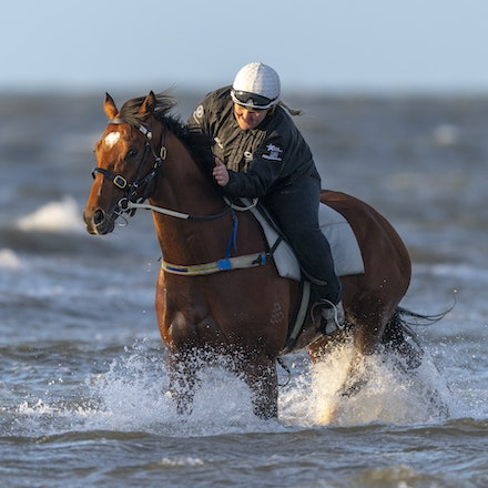 TheAutumnSun-10102018-9823 - Caulfield Guineas favourite THE AUTUMN SUN (Redoute's Choice - Azmiyna) at Altona Beach.    Ridden by Johanne Taylor.  Photo...