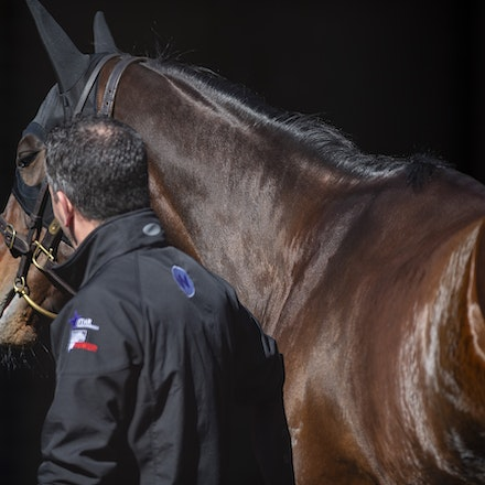 Winx-08182018-2950 - WINX arrives at Randwick before the G1 Winx Warwick Stakes.  Photo by Bronwen Healy.  The Image is Everything - Bronwen Healy Photography.