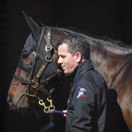 Winx-08182018-2952 - WINX arrives at Randwick before the G1 Winx Warwick Stakes.  Photo by Bronwen Healy.  The Image is Everything - Bronwen Healy Photography.
