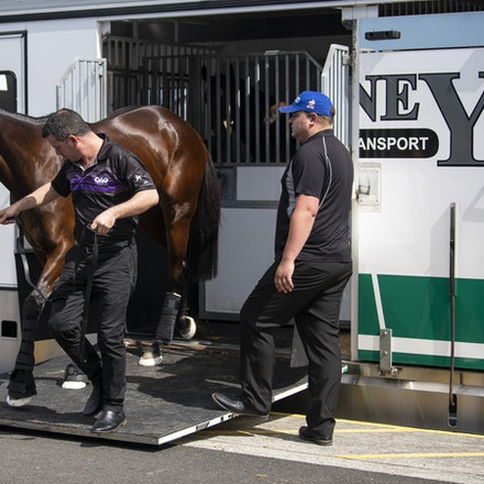 Winx-Arriving-09152018-39246 - WINX arrives at Randwick before the running of the G1 George Main Stakes, where she will attempt to win her 27th consecutive...