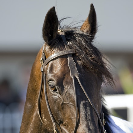 Viewed - Viewed was trained by JB Cummings and won the 2008 Melbourne Cup and the 2009 Caulfield Cup.