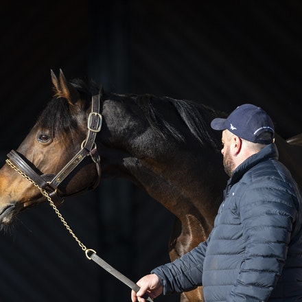 TosenStardom-08122018-0483 - TOSEN STARDOM (Deep Impact) at Woodside Park Stud.  Photo by Btronwen Healy.  The Image is Everything.