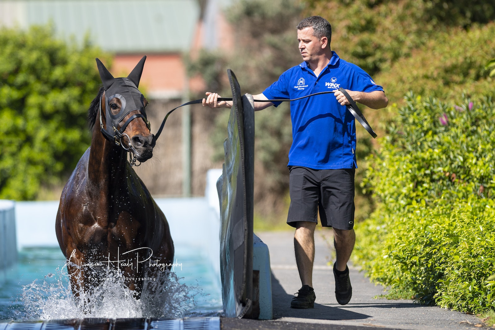 Winx-FlemingtonPool-20181026-3675 - Triple Cox Plate winner WINX swims at Flemington before attempting a record breaking 4th Cox Plate victory.  She is...
