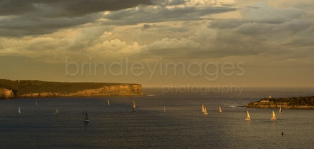 Sydney Harbour_IGP9427 - A view of Sydney harbour at the heads, sunset.