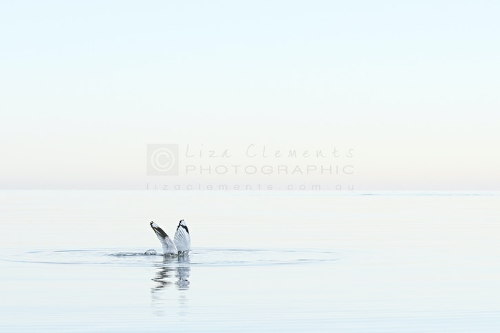 Without A Sound© - Without A Sound Beaumaris, Melbourne, Victoria Open Edition Silver APPA Award, 2016 AIPP Australian Professional Photography Awards Silver...