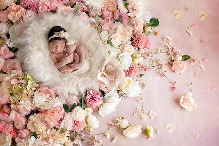 DivineImagesPhotography,newbornphotos,newborn photography-250