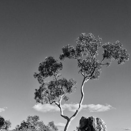 Isa tree bw G3A80047784