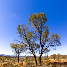Larapinta - Images from a walking trip to Larapinta, Northern Territory, Australia. Six days of hiking in a harsh and ancient landscape in central Australia,...