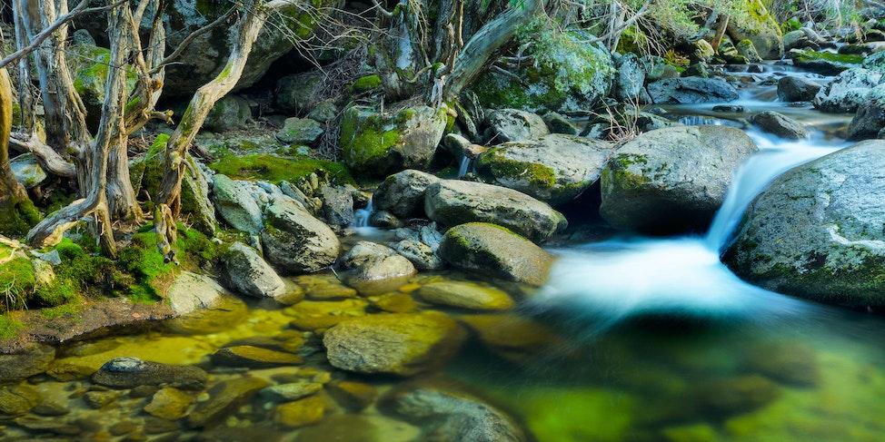 O-LN_Mike_Banks_Merritts-Creek-2