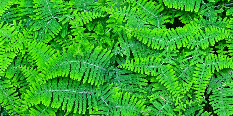 Curracurrong Waterfall Ferns 2X1
