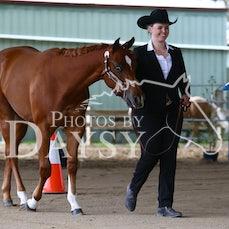 VICTORIAN PAINT HORSE ASSOCIATION SHOW...Ayr Hill...6th October 2019