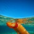 Nudibranchs - Sea Sugs, Marine Slugs, Invertebrates, Great Barrier Reef, Marine Life