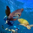 Man and The Sea - Divers, Scuba Diving, Coral reefs, Turtles, Man and diving, Diving, Coral Reef, Great Barrier Reef
