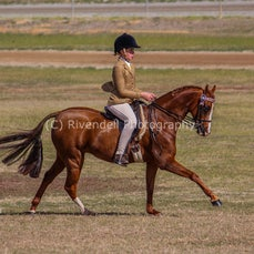 2018 SWHA Junee Hack Show ( Supreame Classes)
