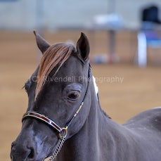 2019 IMHR National Show - Wed Led