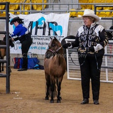 2019 IMHR National Show Wed- Led Showmanship and Jumping