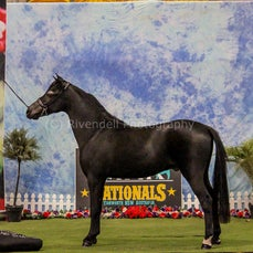 2019 IMHR National Show - Thurs -Photo Booth
