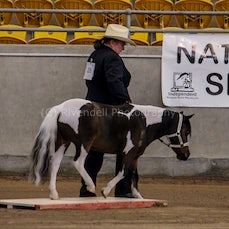 2019 IMHR National Show- Friday Trail
