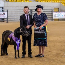 2019 IMHR National Show- Sat - Mini Pony Led