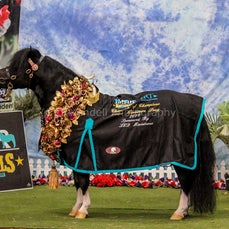 2019 IMHR National Show - Sat - Mini Pony - Photo Booth
