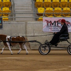 2019 IMHR National Show - Sat - Mini Pony - Harness