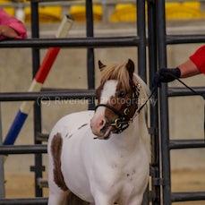 2019 IMHR National Show - Sat - Shetland Pony Classes