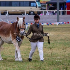 2019 Bathurst Royal - Friday Led & Ridden Haflinger