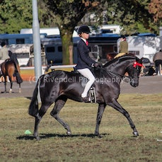 2019 Bathurst Royal -Sat- Open Galloway Hacks by Reece Evans