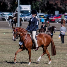 2019 Bathurst Royal -Sat- Open Pony Hacks