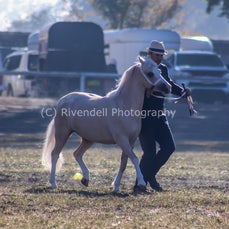 2019 Bathurst Royal - Sun- Led Welsh Pony