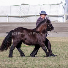 2019 Bathurst Royal - Sun- Led Shetland Pony