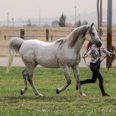 National Captial Horse Show ( Fri Led)
