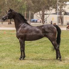 2019 National Captial Horse Show