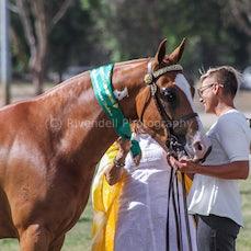 2019 National Captial Horse Show ( Sat Led )