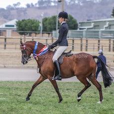 2019 National Captial Horse Show ( Sun Ridden)