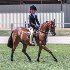 2020 Canberra Royal ( Ridden Rideing pony &Tb's