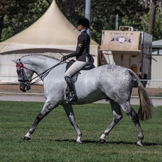 2020 Canberra Royal ( Adult Rider Classes)