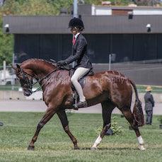 2020 Canberra Royal Ridden Hunter Ponys