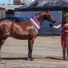 2020 Canberra Royal - Champ APSB Rideing Pony