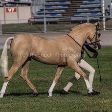 2020 Canberra Royal - Led Hunter Ponys