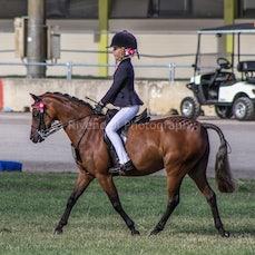 2020 Canberra Royal - Ridden Open Ponys