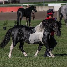 2020 Canberra Royal - Led Shetland Pony
