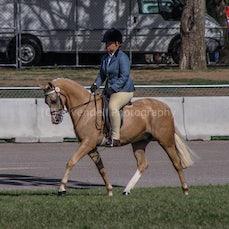 2020 Canberra Royal - Ridden Part-Bred Australian Pony